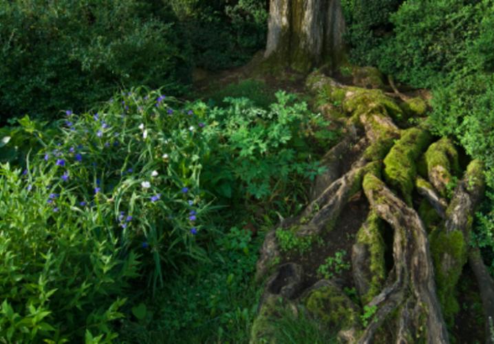 Morven Tree