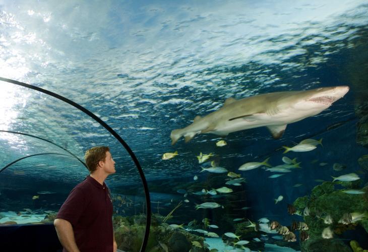 Ripley's Aquarium Tunnel