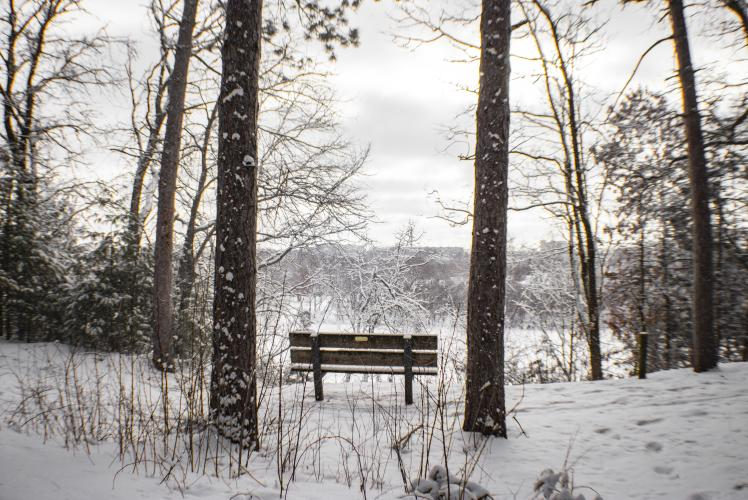 Carson Park in Winter bench
