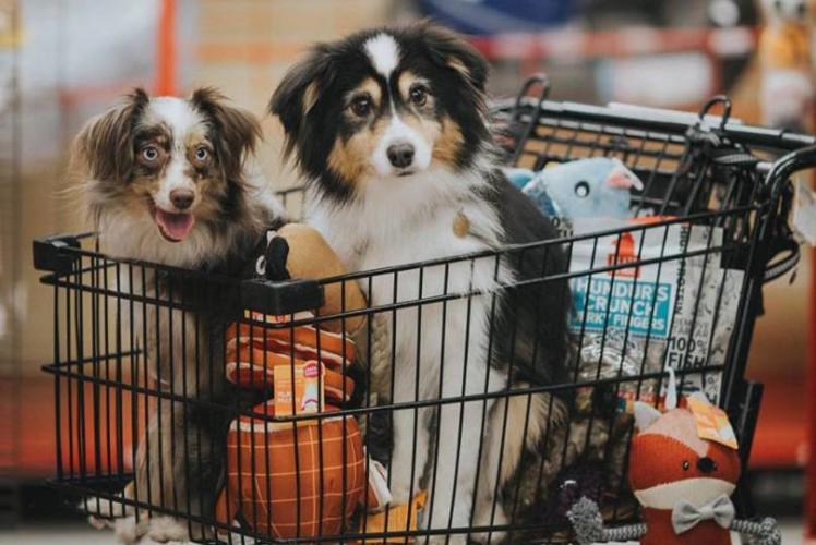 Petco: dogs in cart