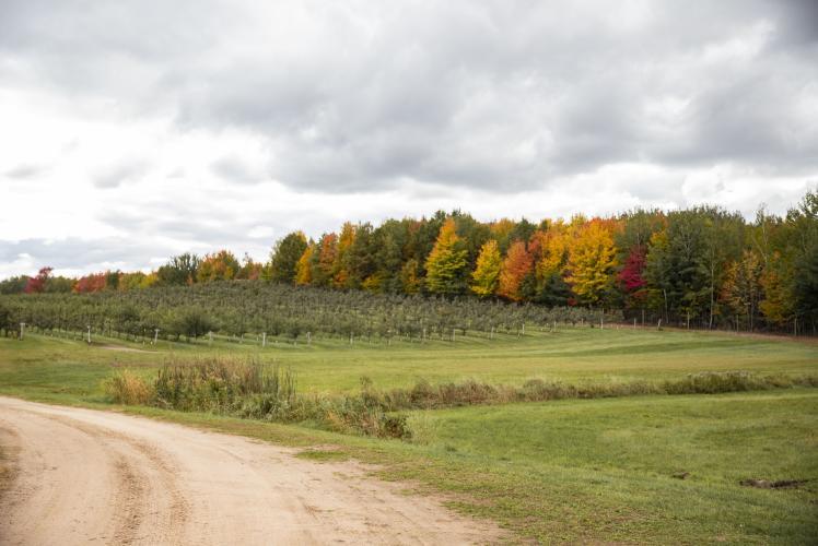 Autumn Harvest Winery & Orchard