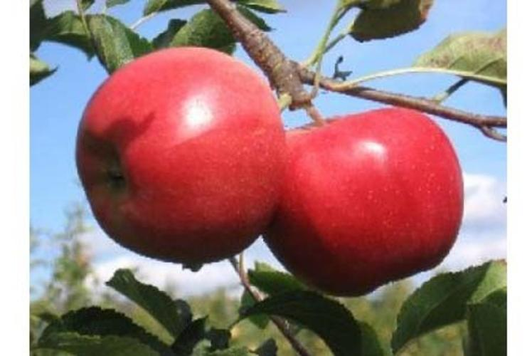 Avenue Apple Orchard In Eau Claire, Wisconsin