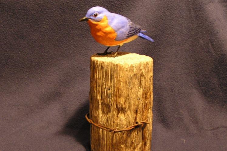 Bluebird on fence post