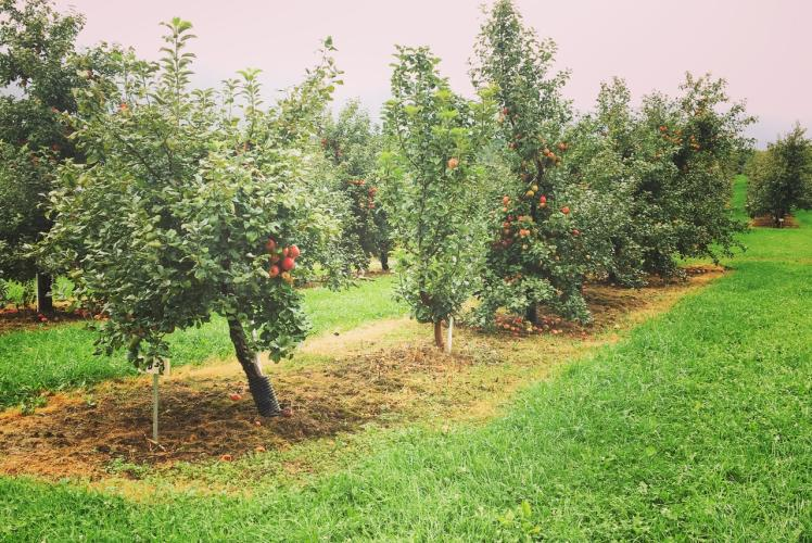 Bushel and a Peck Orchard View
