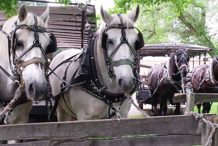Cabin Ridge Rides - Bridled Horses