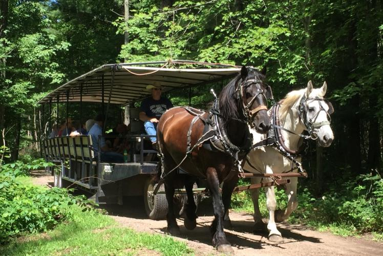 Cabin Ridge Rides - Horse Drawn Wagon