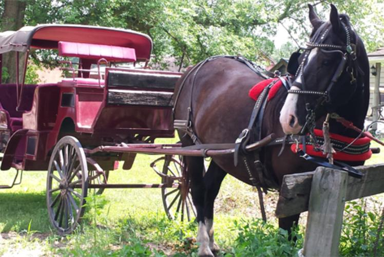 Cabine Ridge Rides - Wedding Carriage