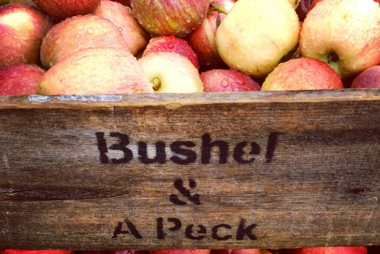 Bushel and a Peck Crate
