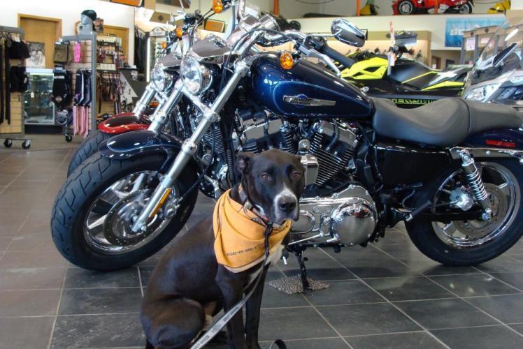 Sport Motors Harley-Davidson