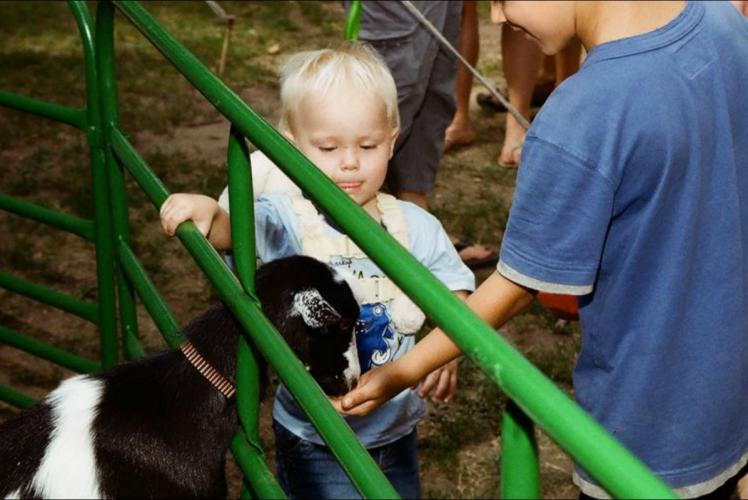 Festival in the Pines Petting Zoo