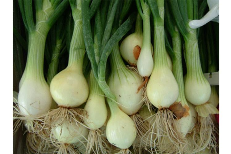 Just Local Food Co-op Green Onions in Eau Claire, Wi
