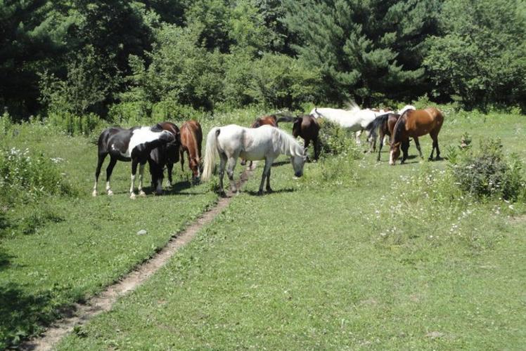 Wilderness Pursuit Camp Horses