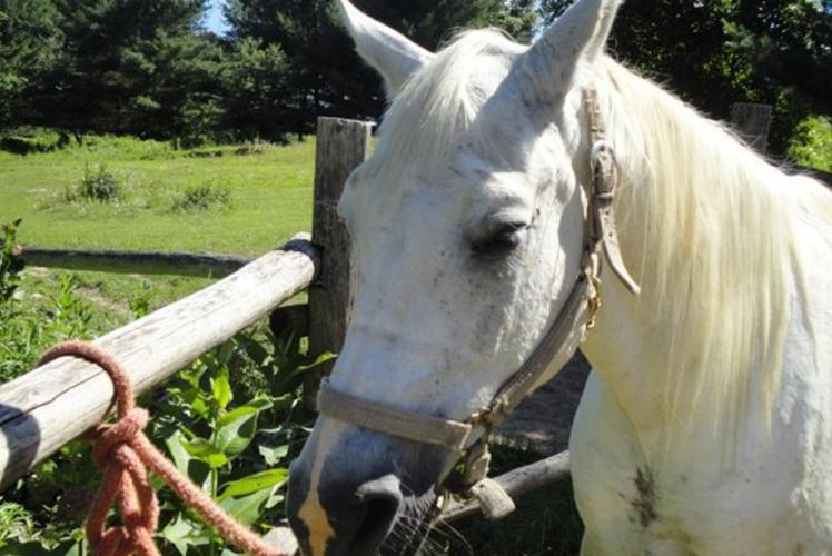 Wilderness Pursuit Horse