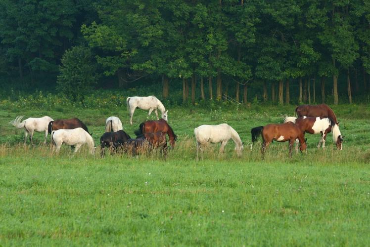 Wilderness Pursuit Horseback Adventures Horses