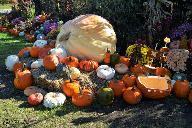 Large pumpkin in display