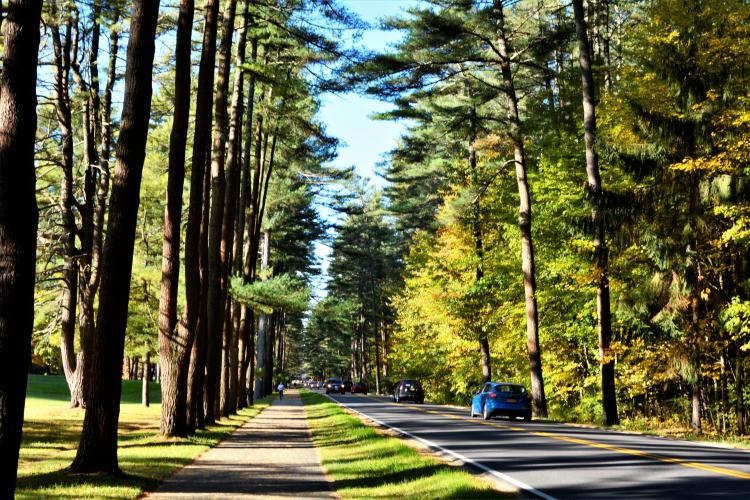 Avenue of the Pines with sunlight throwing shadows across the road and cars driving up and down