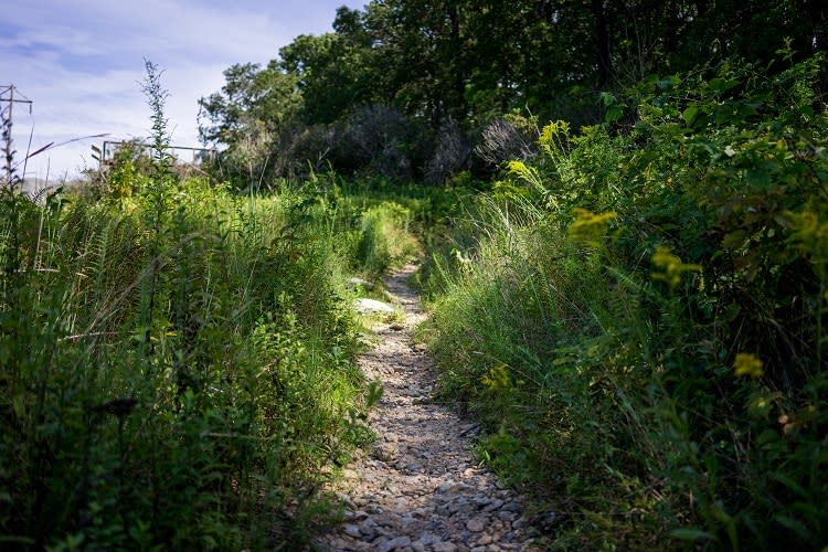Trail at Rocky Ridge County Park