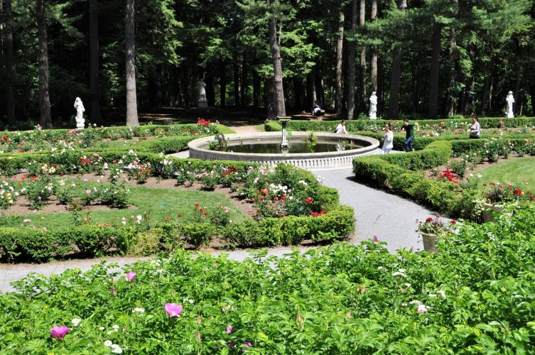 Winding pathway through the roses leading to the koi pond at Yaddo Gardens