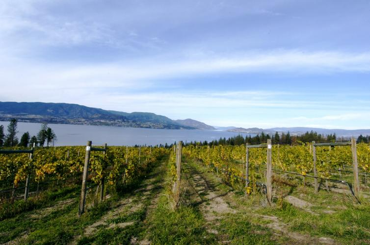 Kelowna - Fall vineyard