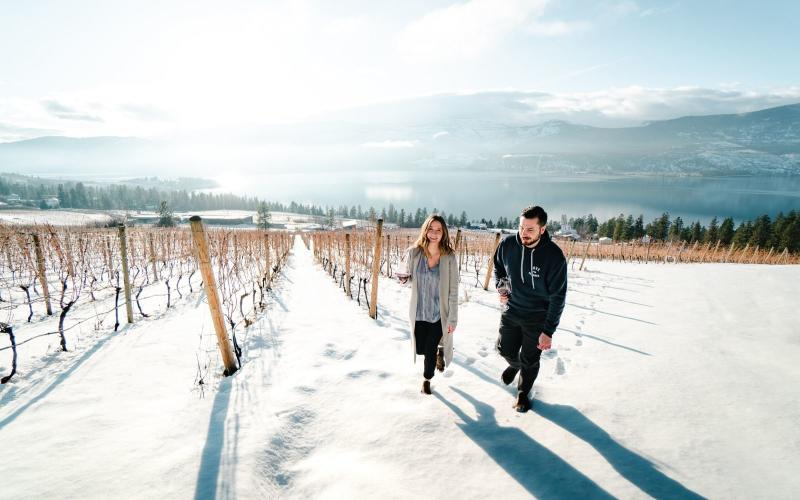 Winter Vineyard - 50th Parallel