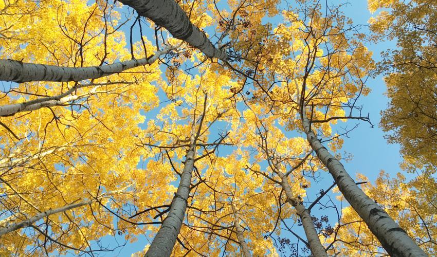 vacation-photo-tips-vantage-point-trees