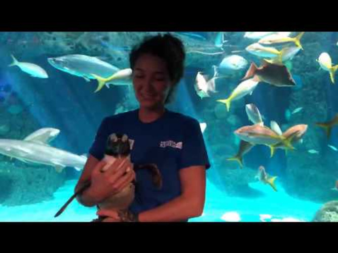 SEA-SPAN Episode 5: Penguins Waddle Through the Aquarium