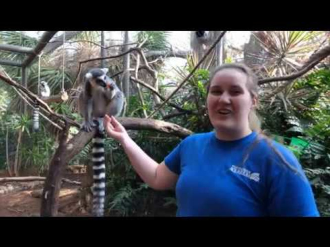 SEA-SPAN Episode 1: St. Patrick's Day Enrichment with Alex and our Lemurs!