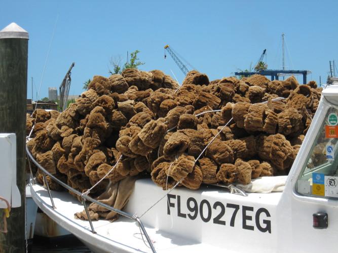 A fresh harvest of sponges.