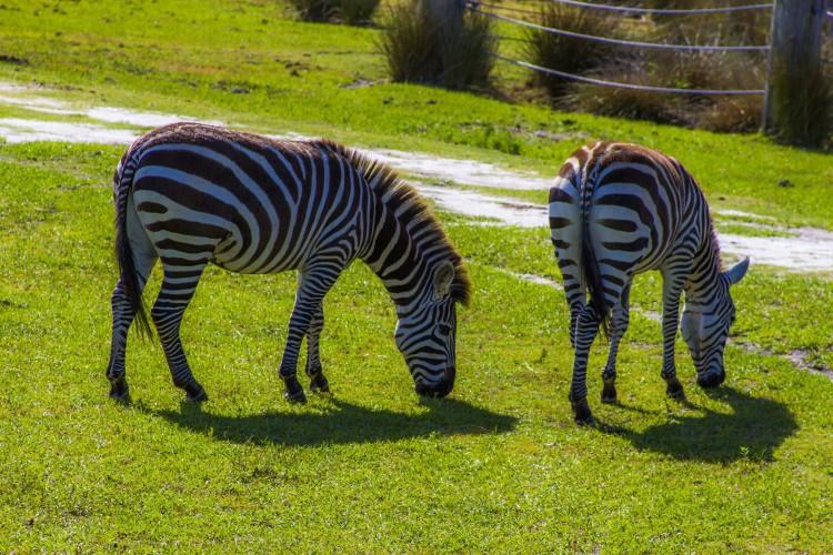 Safari Wilderness