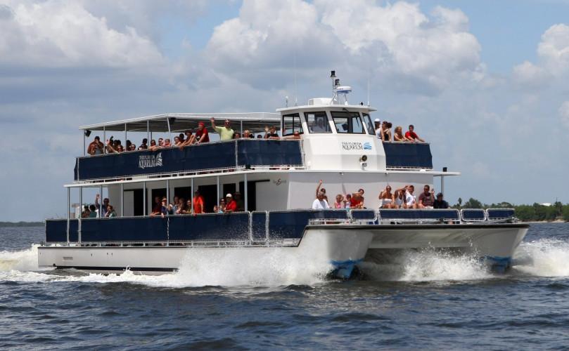 Wild Dolphin Cruise