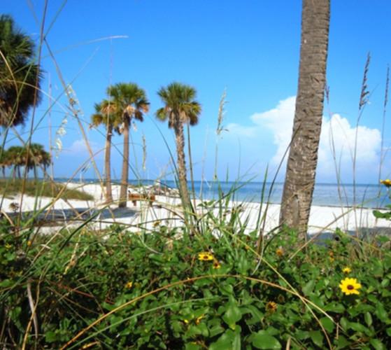 Fred Howard Beach Park