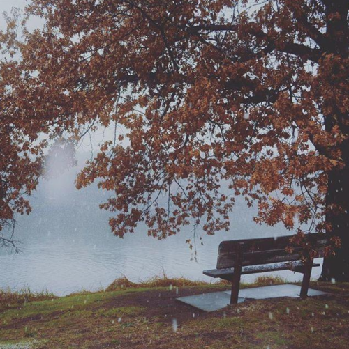 Tree and bench at Braun's Bay