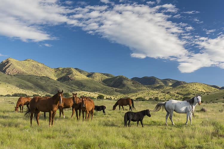 Highland Springs Ranch