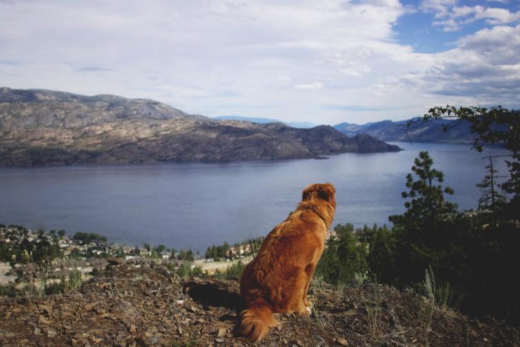 Dog at Pincushion Mountain Summit