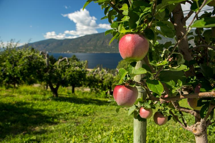 Farms, Orchards and Gardens