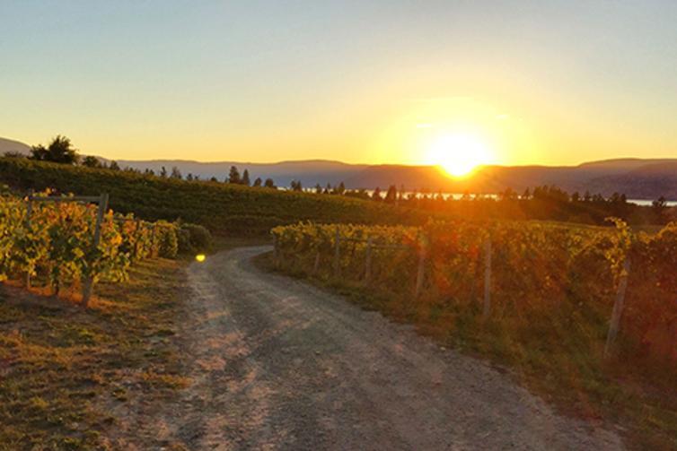 DTN - PS - Sperling Vineyards