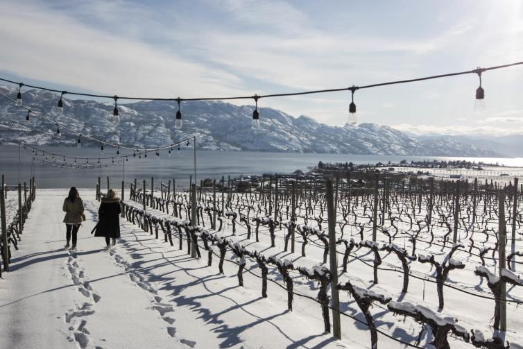 Quails Gate Winery: Winter Vineyard
