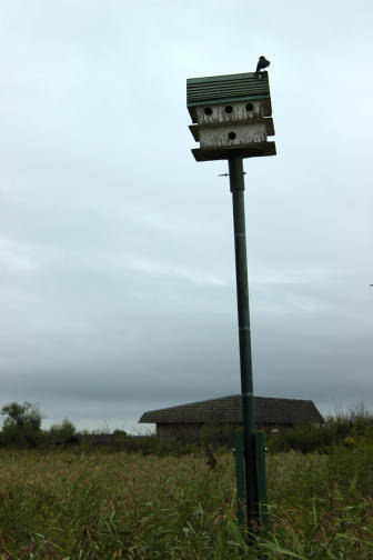 Bird houses at Oak Hammock Marsh.