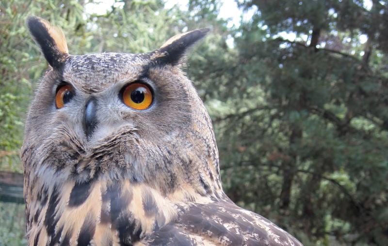 Owl at Cascades Raptor Center by Meg Trendler