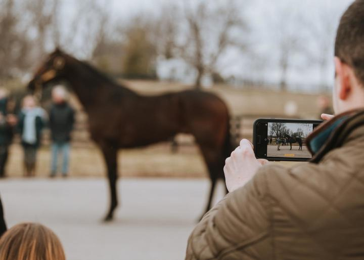 horse and phone-blog