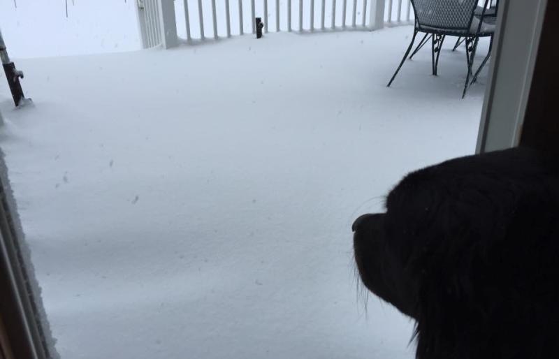 dogs-snow-winter-scenic