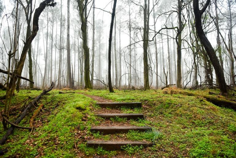 Sandy Creek Nature Center Foggy Trail
