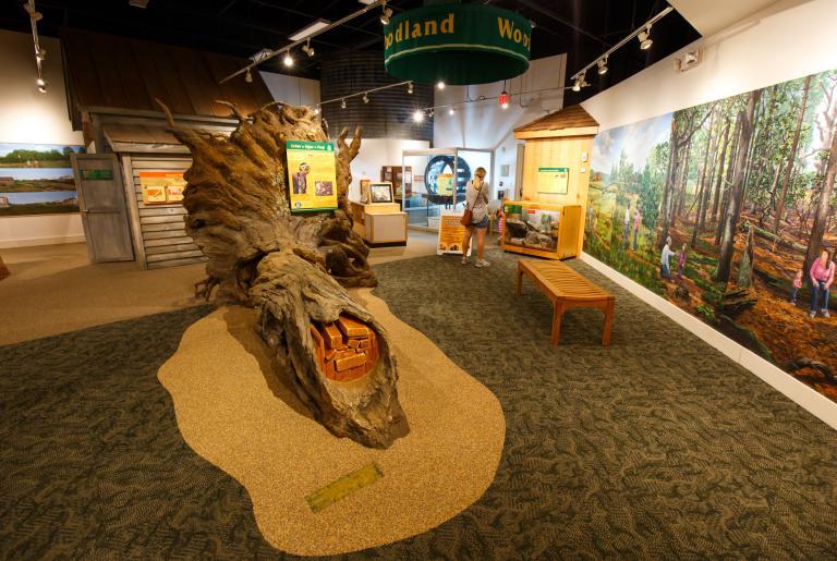 Sandy Creek Nature Center Wetland Exhibit