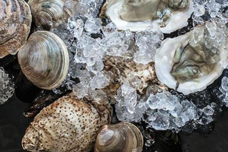 seabear oysters