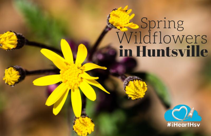 Spring wildflowers in Huntsville, AL