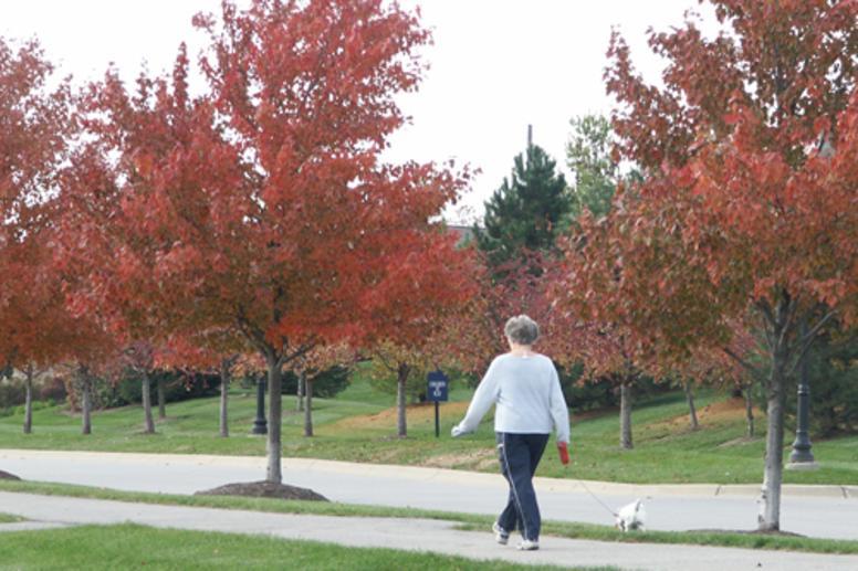 Brooks School Park Fall