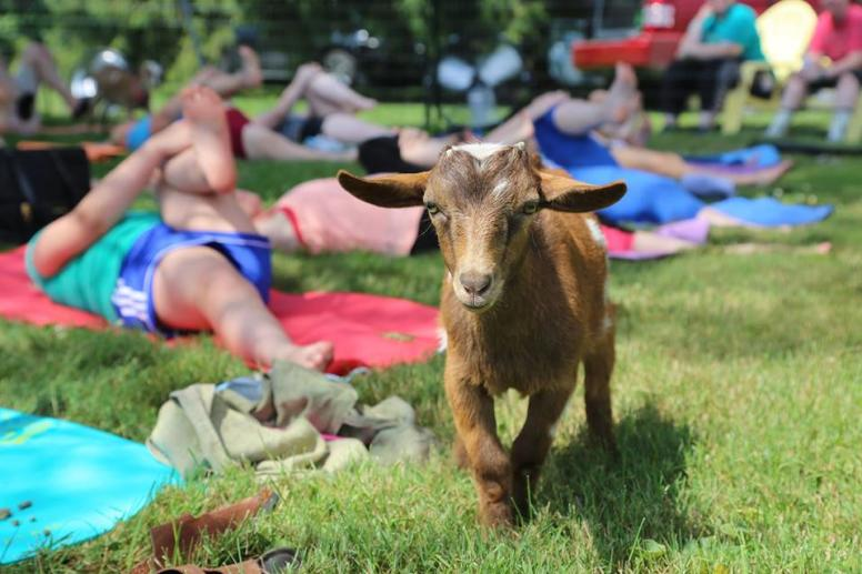 Happy Goat Lucky Yoga