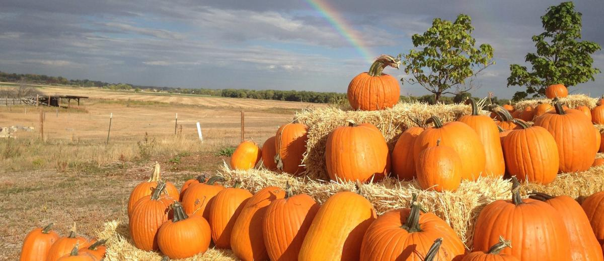 Red Wagon Farm pumpkins