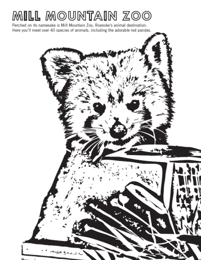 Mill Mountain Zoo - Red Panda