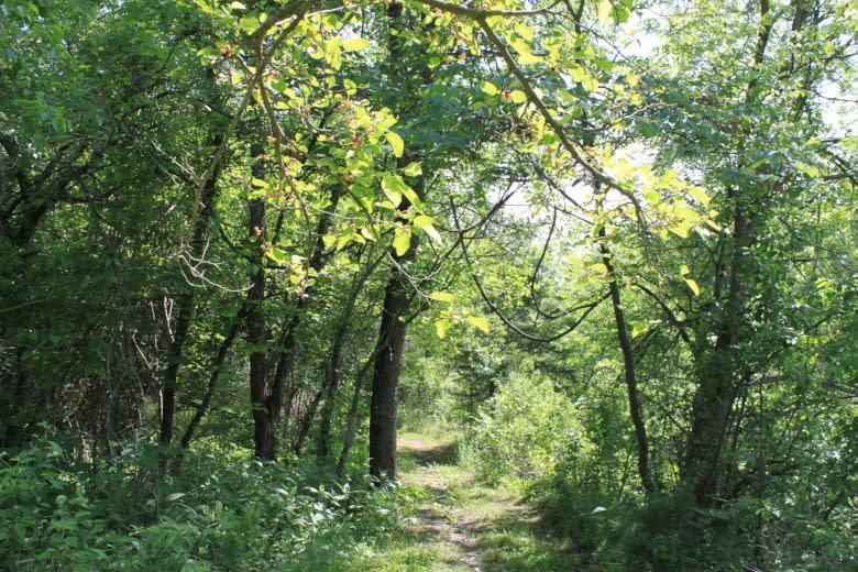 Dornwood Trails 3
